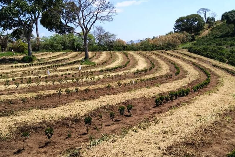 Sustainable Coffee Farming