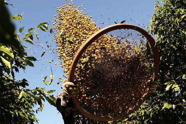 Coffee Beans in Air