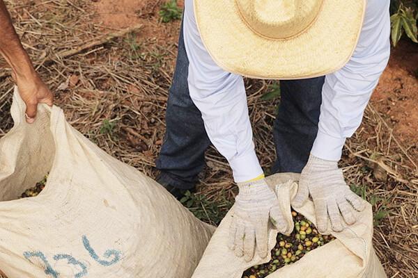 Coffee Bean Farmers
