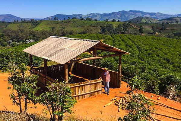 Nobletree Coffee Brazilian Farm