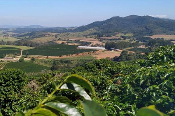 Nobletree Coffee Farm
